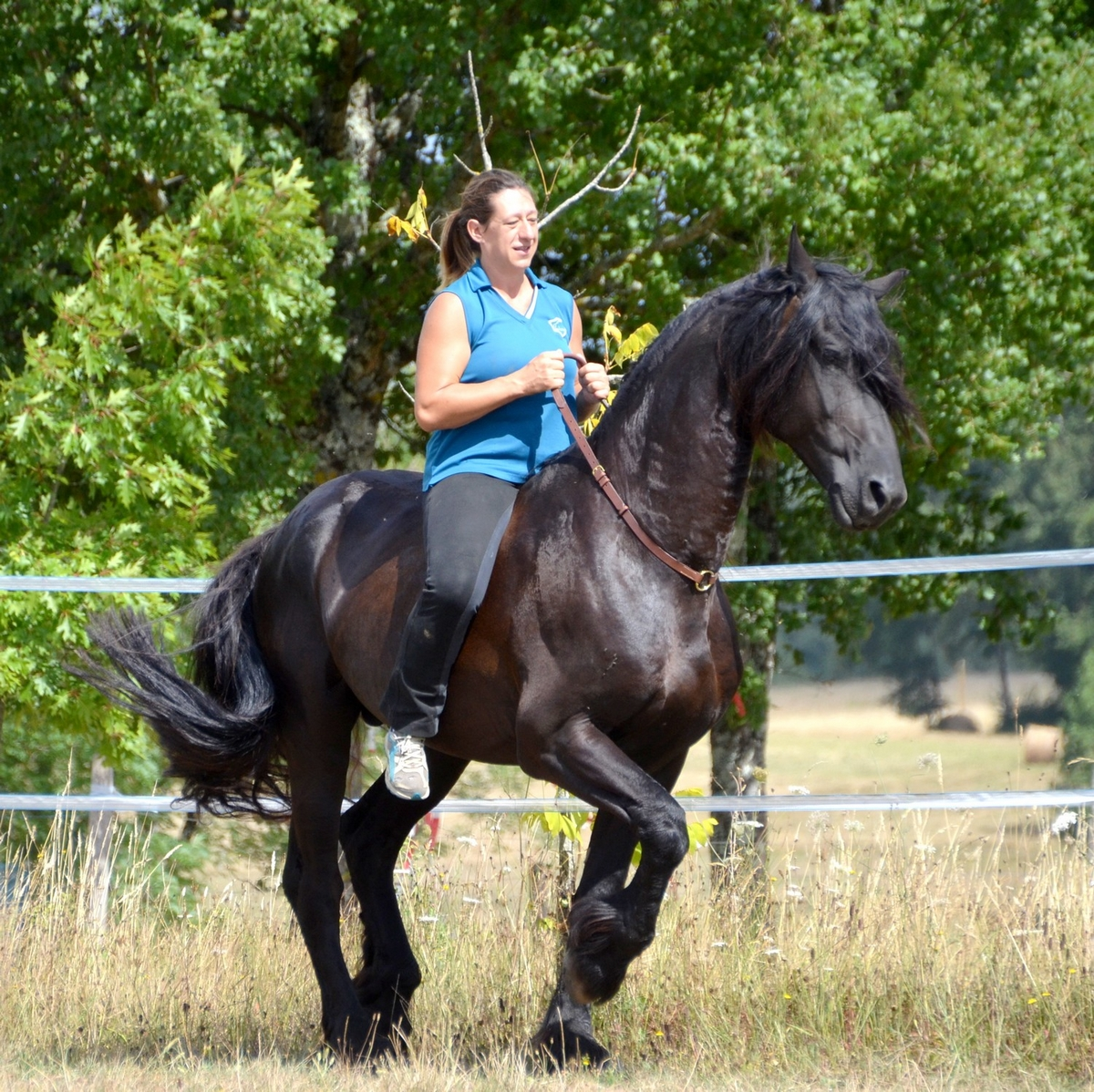 cordéo cheval monte en liberté cordelette cuir