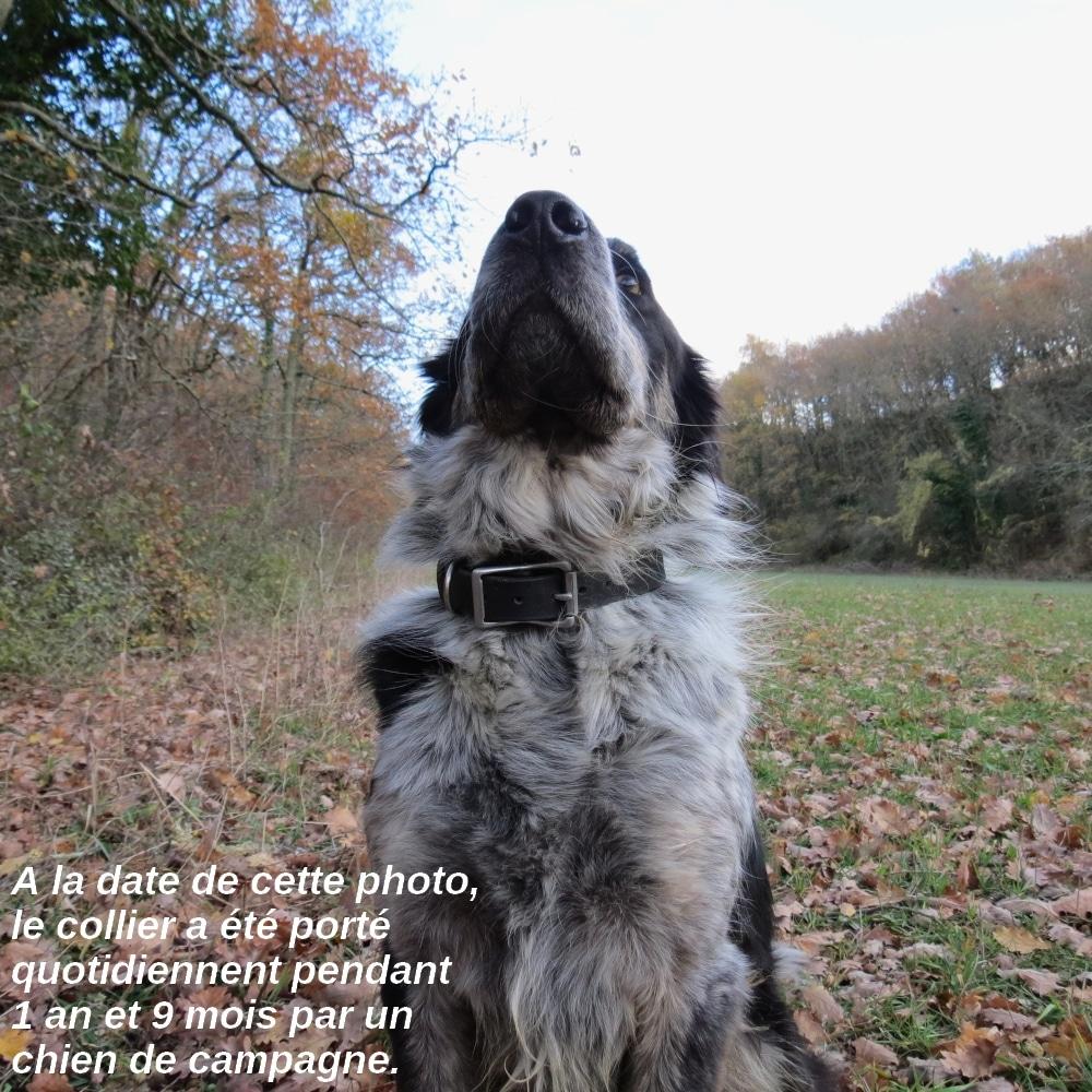 collier solide en cuir pour chien